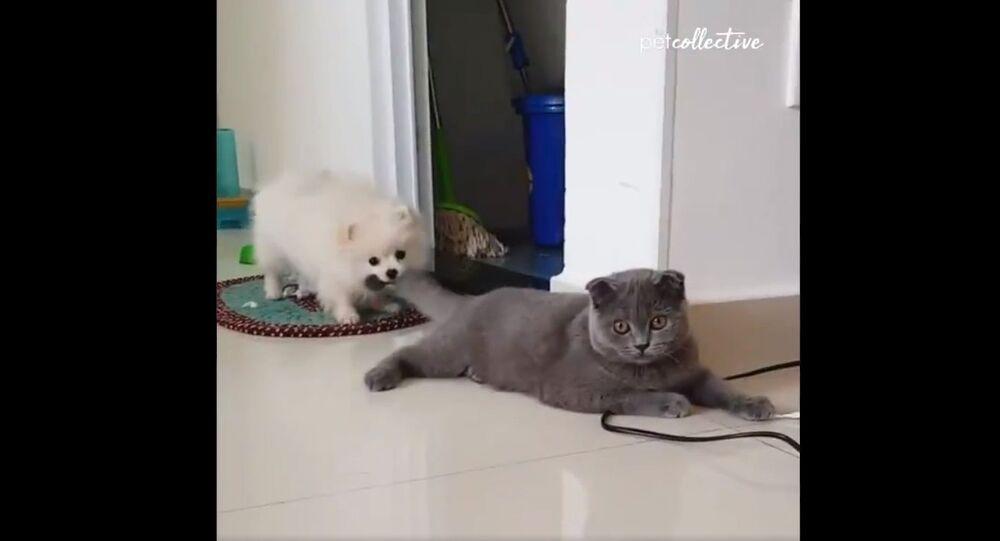 Neuvěřitelná reakce kočky na psa