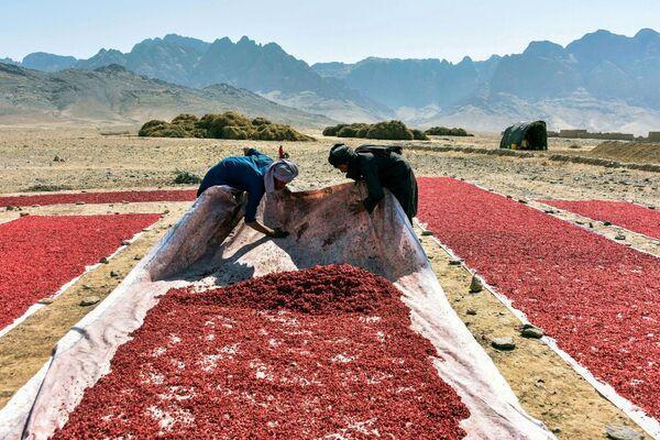 Farmáři v Afghánistánu - Sputnik Česká republika