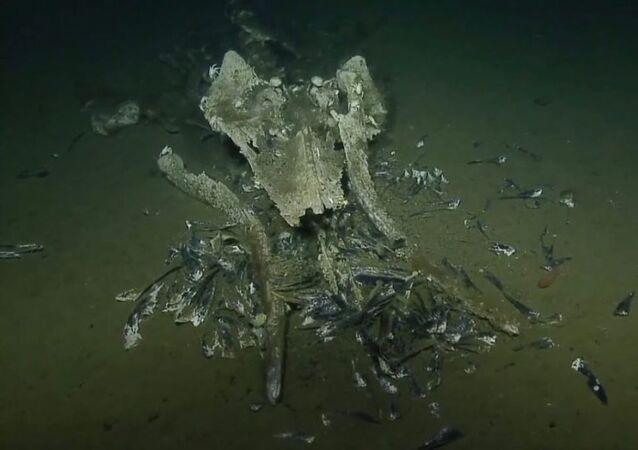 Co se stalo za rok s mrtvou velrybou na dně oceánu