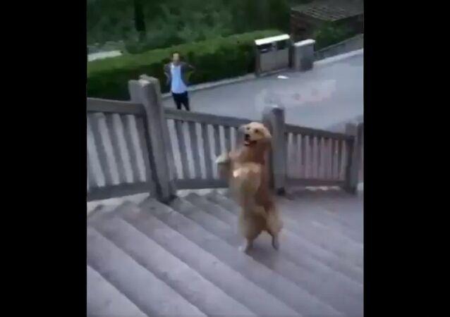 Šíleně chytrý pes!