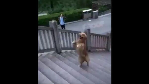 Šíleně chytrý pes! - Sputnik Česká republika