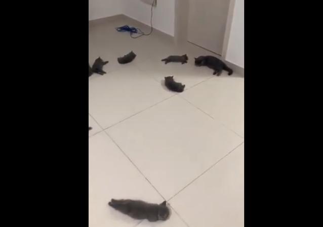 Miniaturní koťata si dala šlofík na podlaze