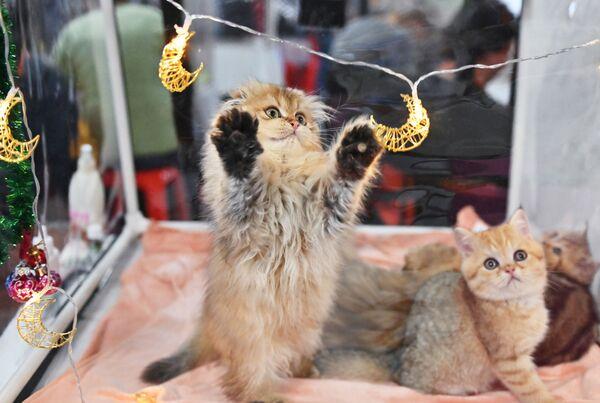 Kočka si hraje s přívěsem na výstavě KoShariki-Show v Moskvě - Sputnik Česká republika