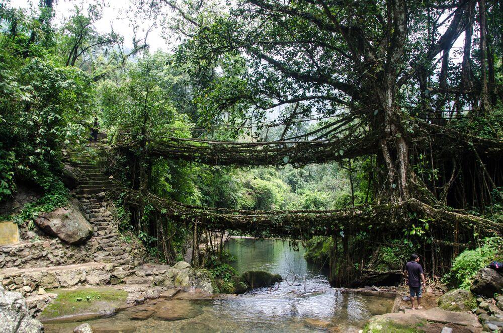 Dvoupodlažní živý kořenový most v Indii