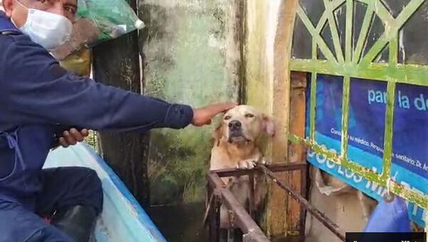 Mexičtí záchranáři zachránili labradora - Sputnik Česká republika
