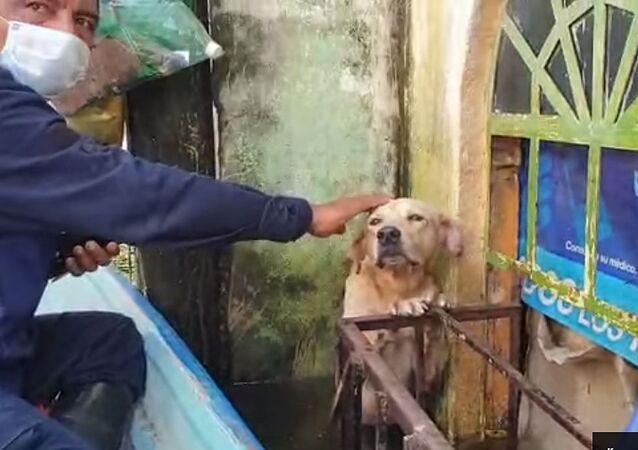 Mexičtí záchranáři zachránili labradora