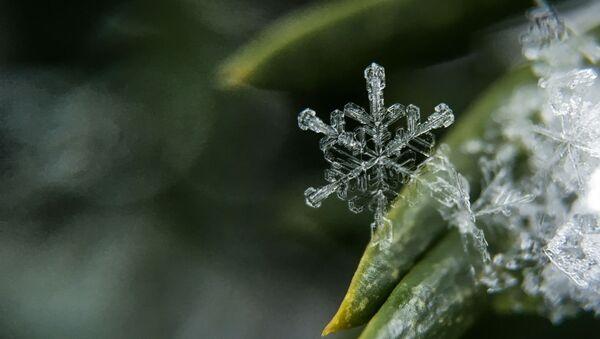 Sněhová vločka - Sputnik Česká republika