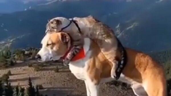 Kočka se psem společně odpočívali na útesu - Sputnik Česká republika