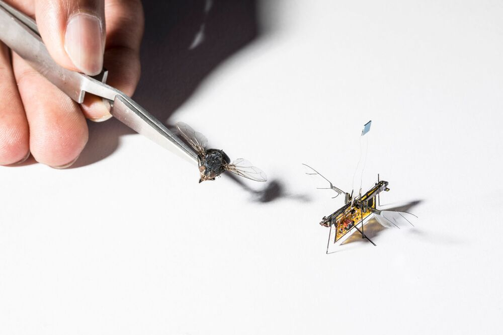 Létající robot RoboFly je o něco větší než skutečná moucha.