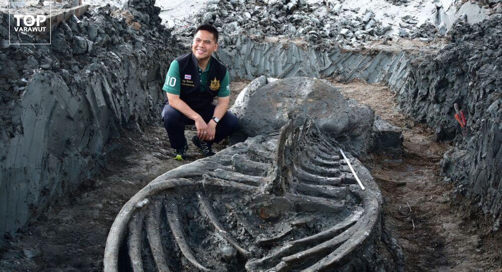 Thajský ministr životního prostředí Varawut Silpa- archa při vykopávkách starověké velryby