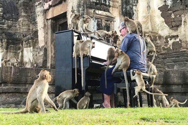 Britský hudebník Paul Barton hraje na klavír pro opice, které obsadily opuštěnou historickou oblast v Lopburi, Thajsko. - Sputnik Česká republika