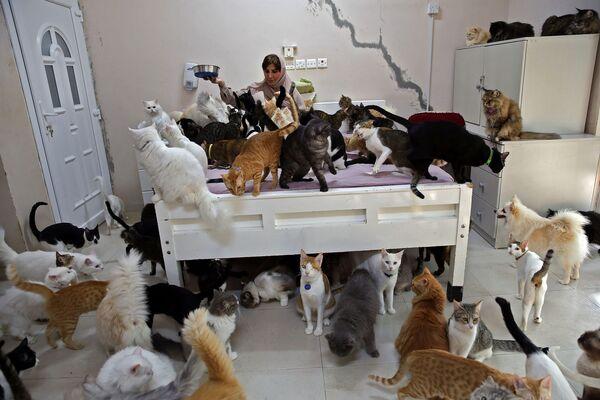 Maryam Al Balushi krmí své domácí mazlíčky ve svém domě v hlavním městě Ománu, Maskatu. Navzdory stížnostem sousedů a rostoucím nákladům si žena pořídila již 480 koček a 12 psů, protože jí domácí mazlíčci prý zlepšují náladu, a obecně jsou pro ni lepšími společníky než lidé. - Sputnik Česká republika