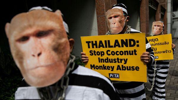 Aktivisté za práva zvířat PETA protestují proti zneužívání opic v thajském kokosovém průmyslu. Město Makati, Filipíny. - Sputnik Česká republika
