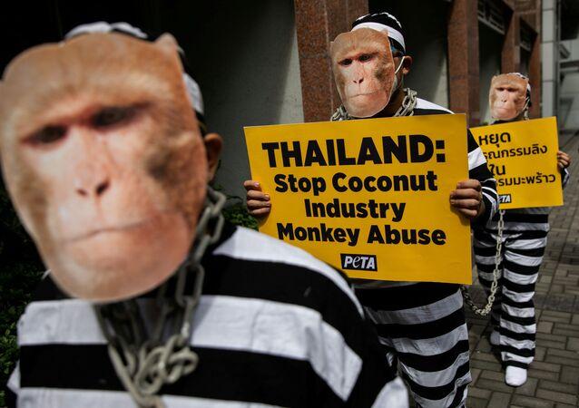 Aktivisté za práva zvířat PETA protestují proti zneužívání opic v thajském kokosovém průmyslu. Město Makati, Filipíny.