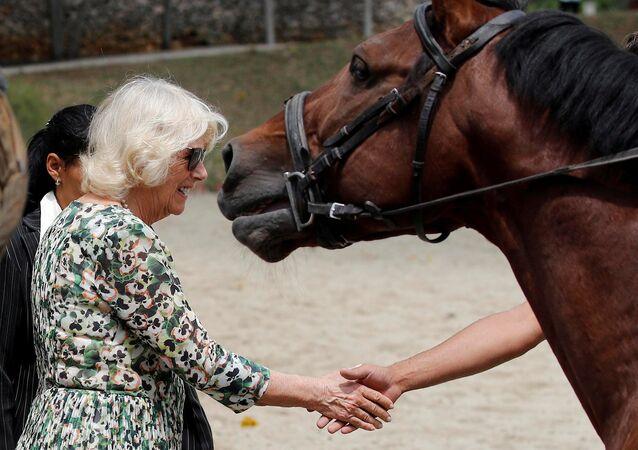 Camilla, vévodkyni z Cornwallu, během návštěvy Národního jezdeckého centra v Havaně, Kuba