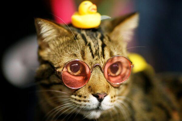 Kocour v brýlích na protestech v Bangkoku. - Sputnik Česká republika