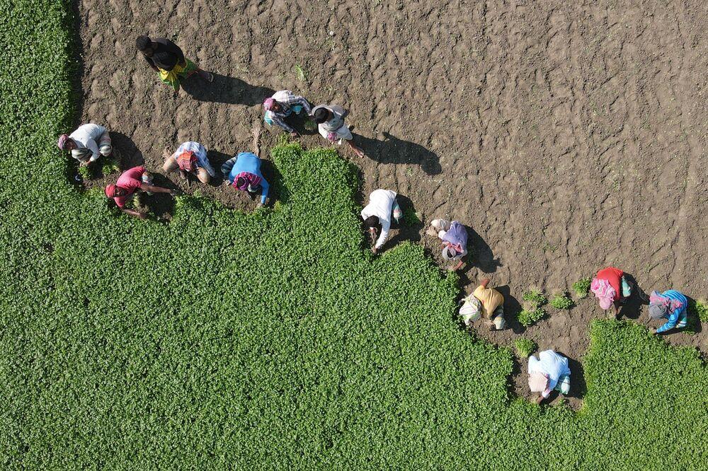 Rolníci v Bangladéši.