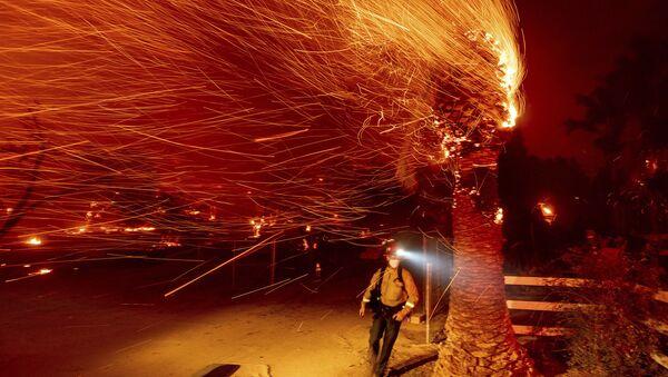 Hasič prochází kolem hořícího stromu při hašení požáru v obci Silverado v Kalifornii - Sputnik Česká republika