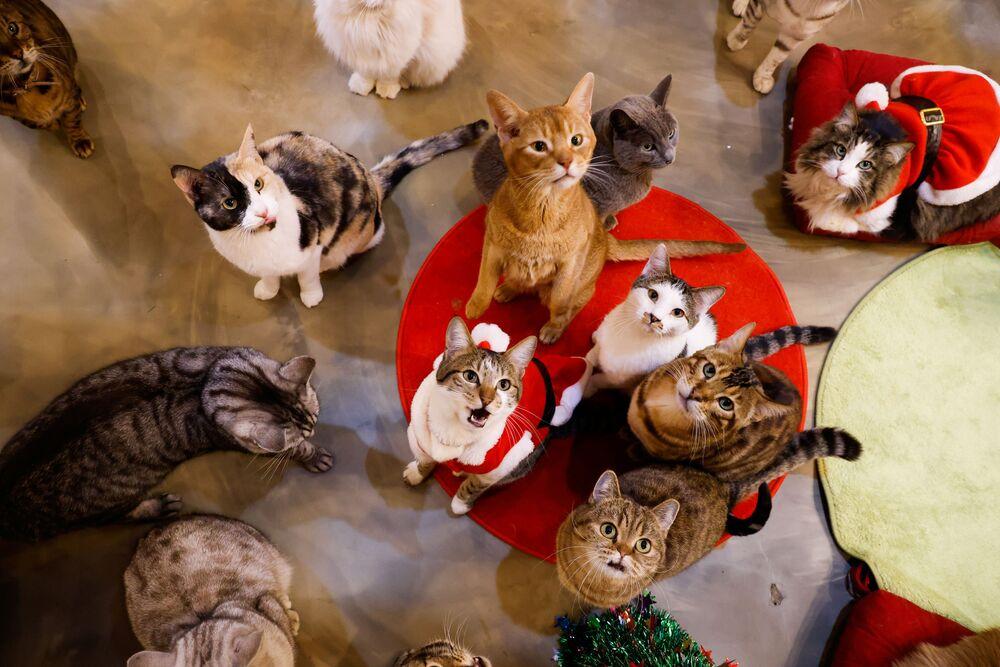 Kočky se dívají na Catgarden v Soulu, Jižní Korea