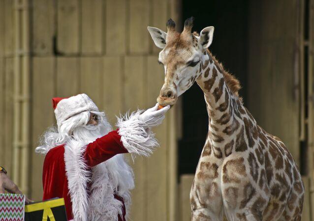 Vánoce potěší každého. Jaké dárky dostala zvířata v různých zoologických zahradách světa