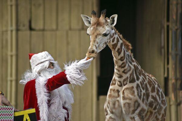 Vánoce potěší každého. Jaké dárky dostala zvířata v různých zoologických zahradách světa - Sputnik Česká republika