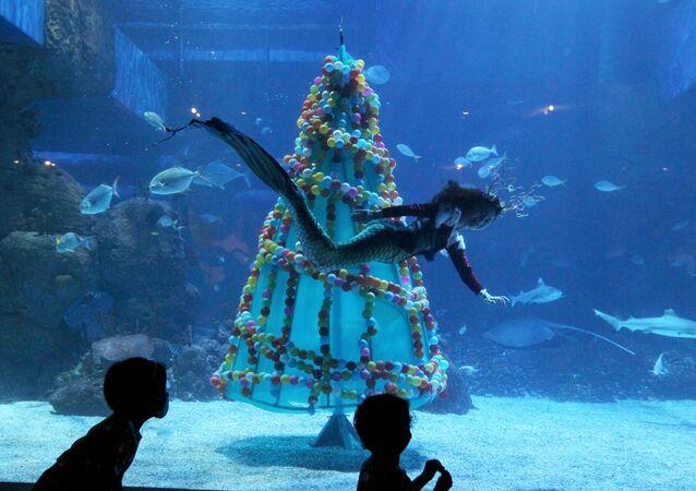 Potápěč plave kolem vánočního stromku v akváriu Jakarta