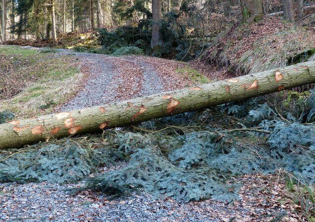 Popadaný strom