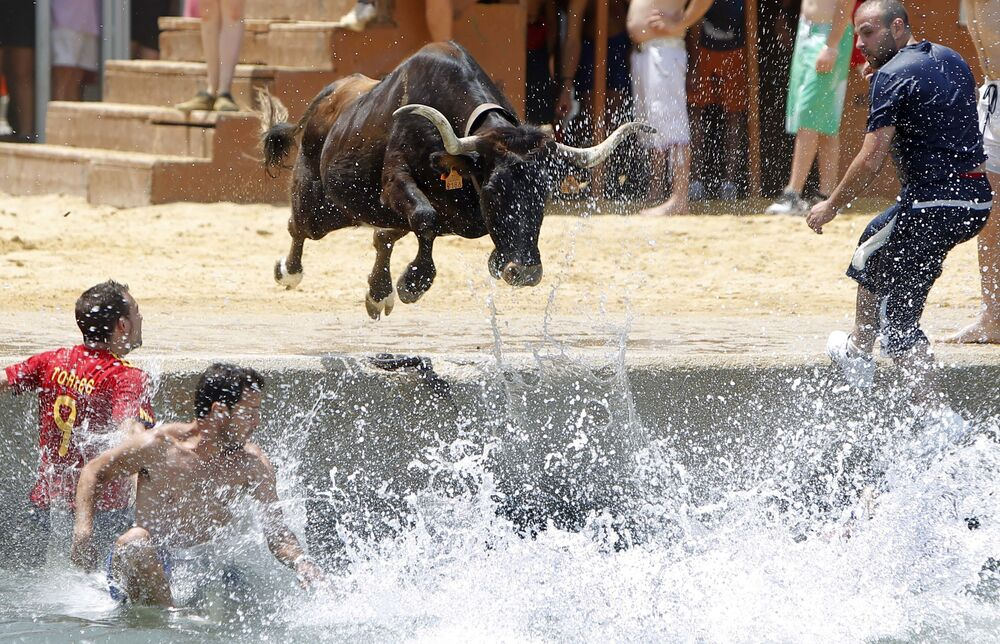 Býk skáče do moře během španělského festivalu Bous a la mar