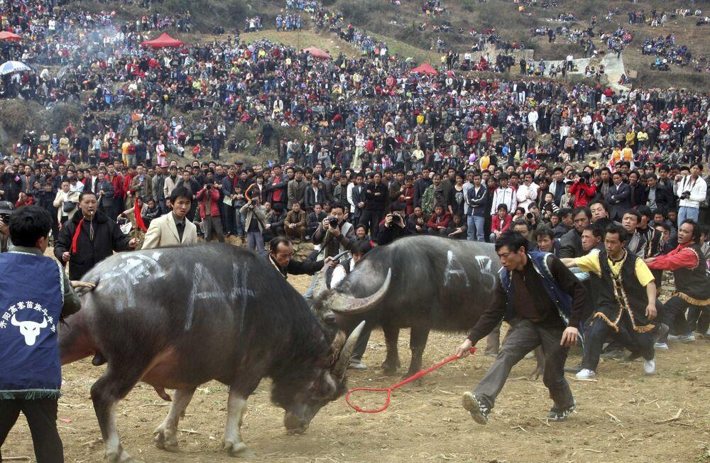 Etnická skupina národů Miao během bitvy býků v Číně