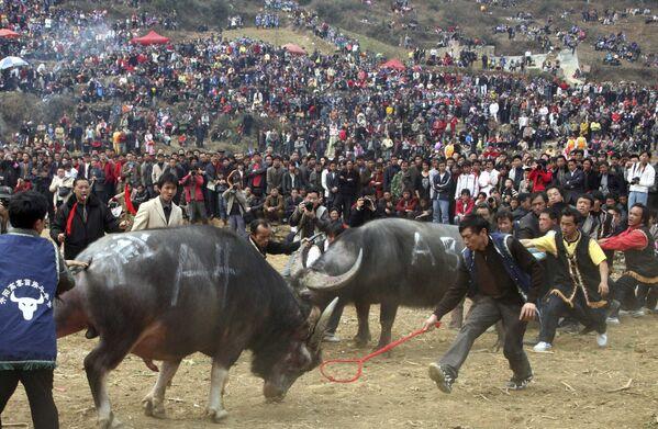 Etnická skupina národů Miao během bitvy býků v Číně - Sputnik Česká republika