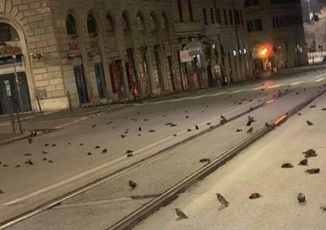 Mrtví ptáci v Římě
