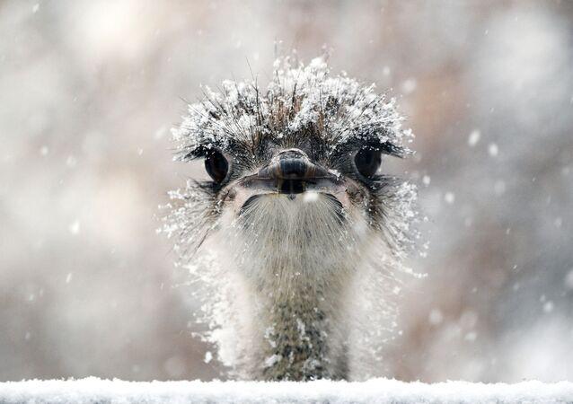 Je ti teplo, pando? Zvířata a ptáci v zoo si užívají sněhu