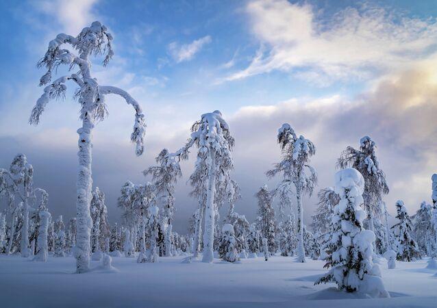 Sergej Mežin: Uralské palmy. Permská oblast, rok 2020