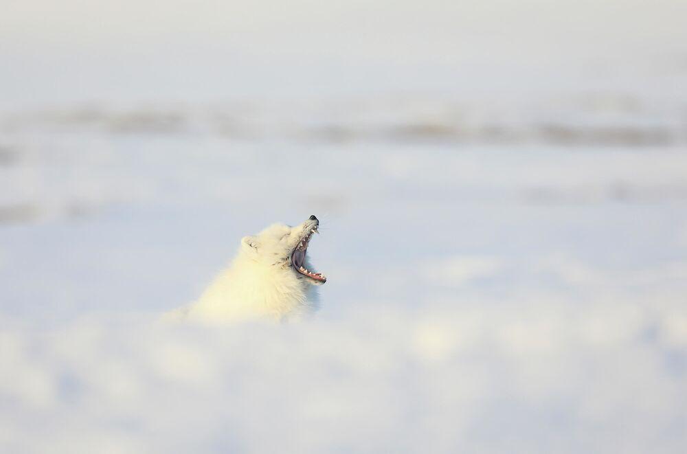 Vasilij Baranjuk: Bílý krokodýl. Čukotská autonomní oblast, rok 2020