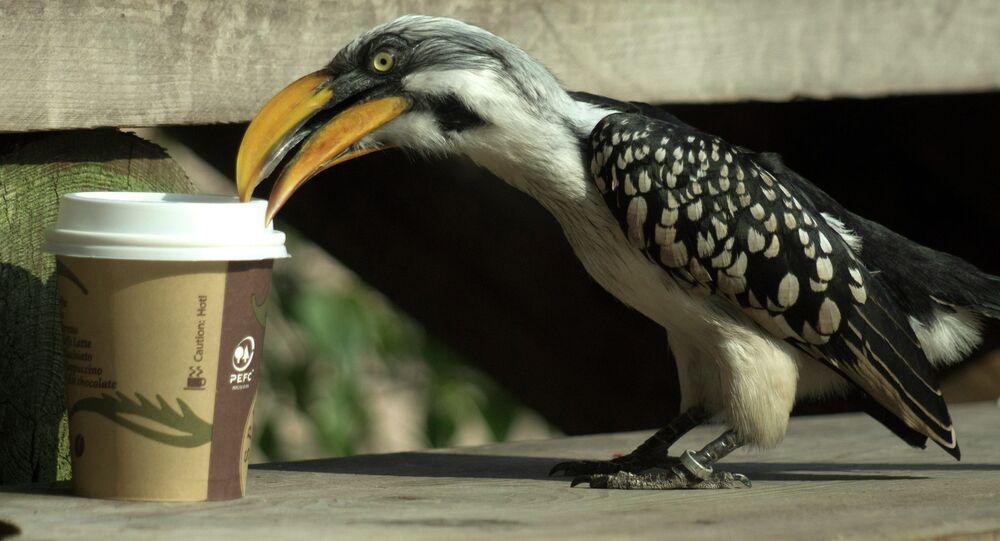 Káva. Ilustrační foto