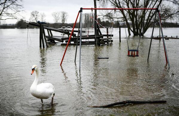 Labuť na zaplaveném hřišti v Německu - Sputnik Česká republika