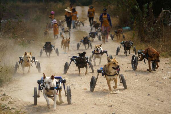 Invalidní psi před venčením ve fondu The Man That Rescues Dogs Foundation v Chonburi, Thajsko  - Sputnik Česká republika
