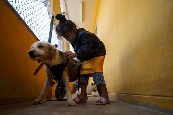 Dívka dává na postiženého psa pomůcku pro chůzi před každodenním venčením v The Man That Rescues Dogs Foundation v Chonburi, Thajsko  - Sputnik Česká republika