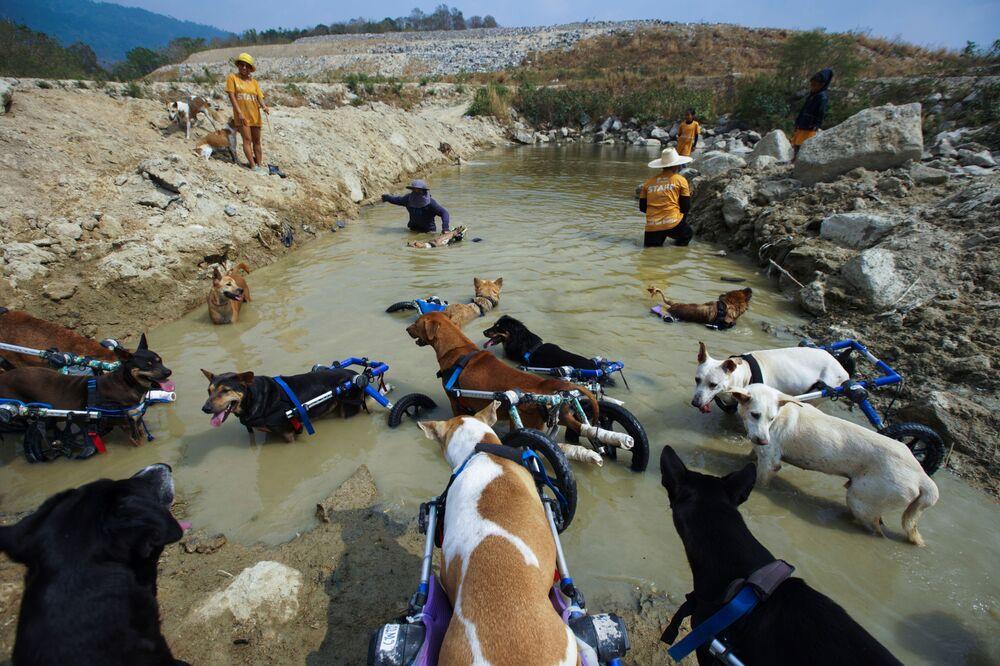 Láska existuje aneb Neuvěřitelně šťastní chlupáči: Jak probíhá venčení zdravotně postižených psů v thajském fondu