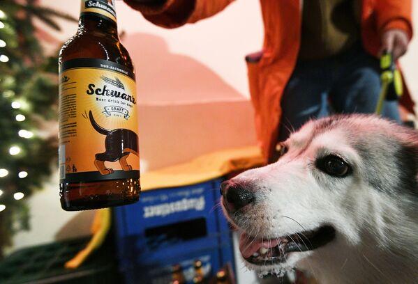 Pes v baru Underdog v Moskvě.  - Sputnik Česká republika