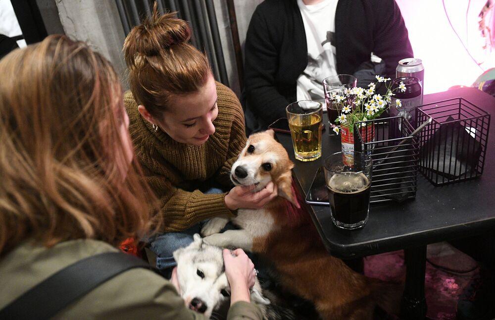 Návštěvníci se svými domácími mazlíčky v baru Underdog v Moskvě