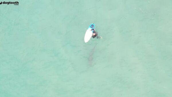 V Austrálii roztržitý surfař omylem šlápl na žraloka. Podívejte se, kdo se vyděsil víc - Sputnik Česká republika