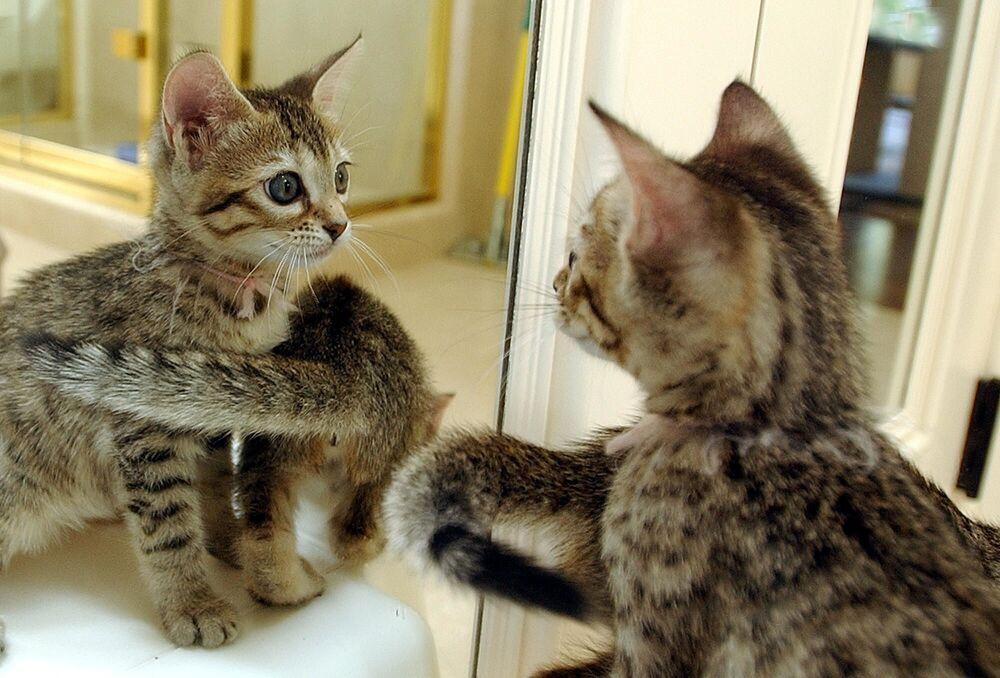 Klonovaná zvířata. Když zázraky biologické vědy berou dech