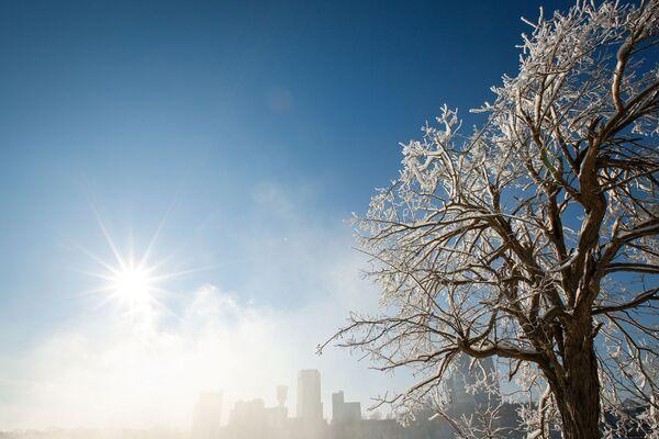Ledem pokryté stromy v Niagara Falls v New Yorku - Sputnik Česká republika