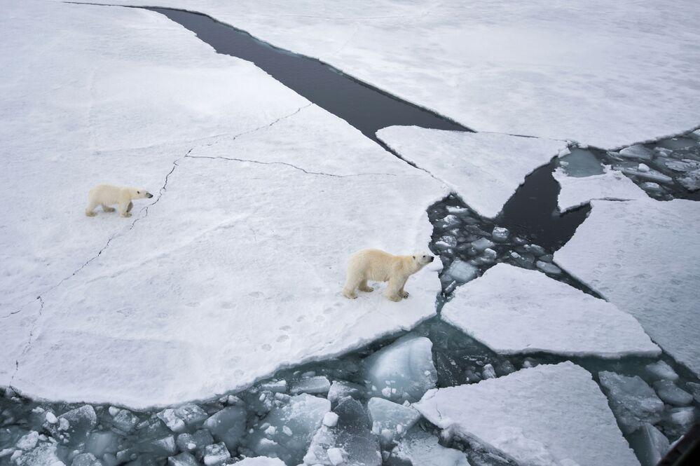 Lední medvěd s malým medvídkem v oblasti Země Františka Josefa v Barentsově moři