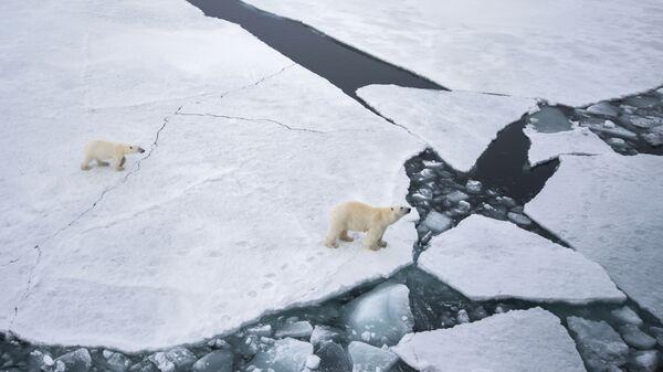 Белая медведица с медвежонком в районе архипелага Земля Франца Иосифа в Баренцевом море - Sputnik Česká republika