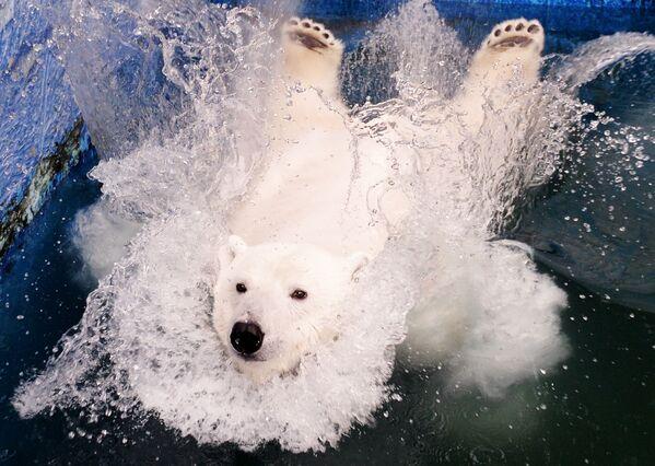 Lední medvěd Uršula v parku Rojev Ručej v Krasnojarsku. - Sputnik Česká republika