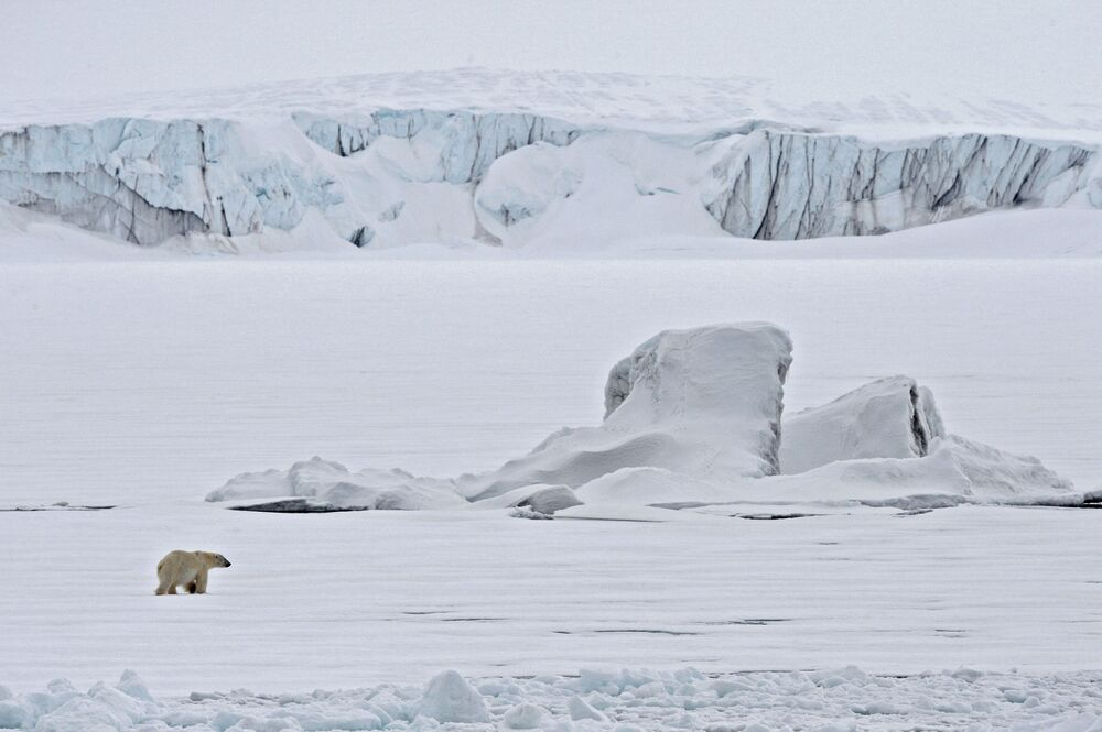 Lední medvěd na ledu v Severním ledovém oceánu