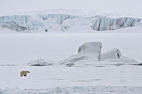 Lední medvěd na ledu v Severním ledovém oceánu. - Sputnik Česká republika