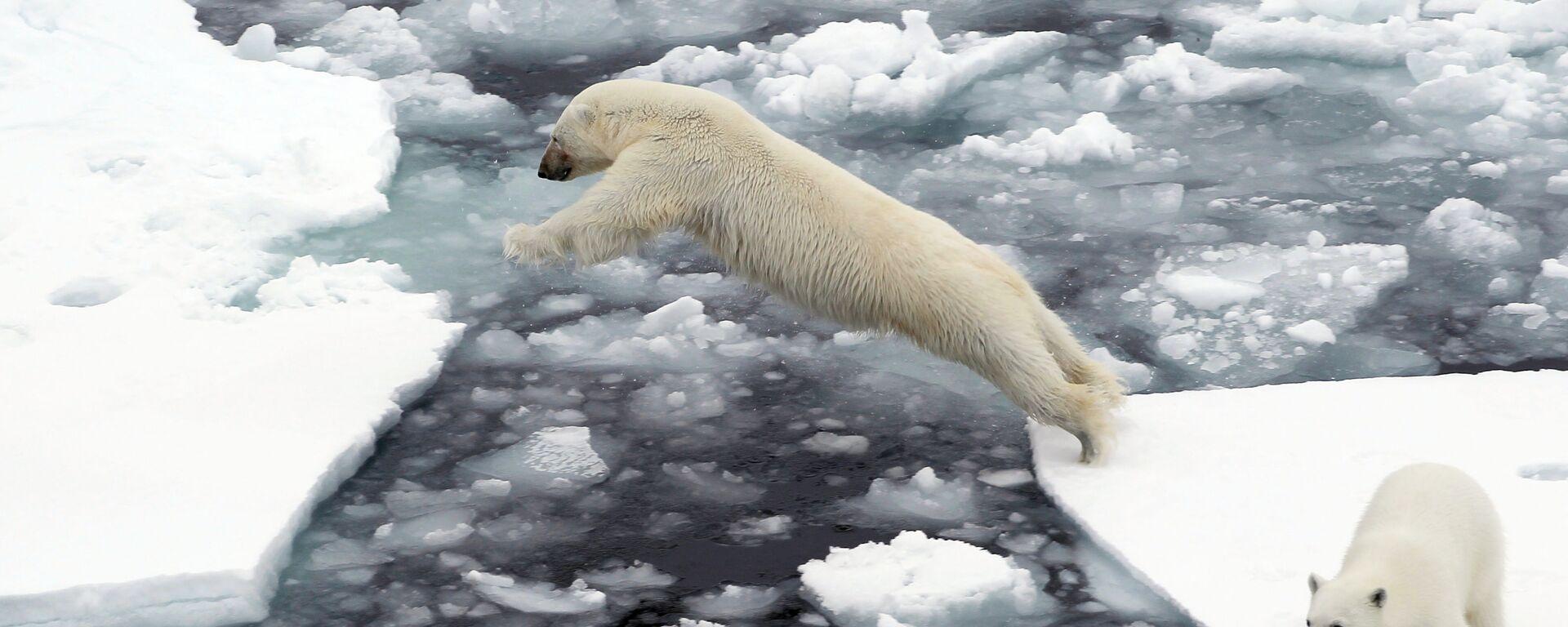 Lední medvědi na ledových krách v Severním ledovém oceánu. Ilustrační foto - Sputnik Česká republika, 1920, 09.08.2021